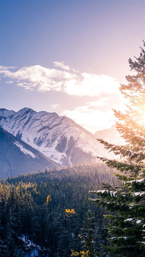 wallpaper banff national park mountains forest peak
