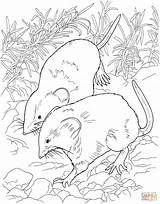 Habitat Forest Coloring Kolorowanki Drawing Kolorowanka Template Myszka Myszy Drukuj Druku sketch template