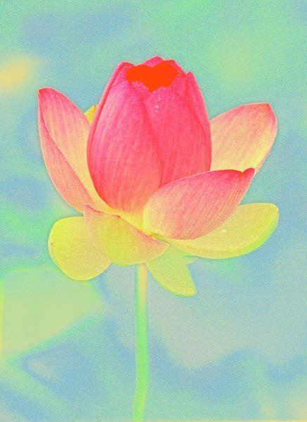 786 church road wayne pa 17 meilleures images 224 propos de fleur de lotus sur pinterest tatouages de lotus pennsylvanie