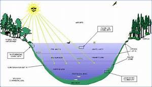 Aquatic Ecosystems  Aquatic Ecosystems Diagram