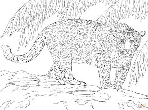 jaguar coloring pages  adults coloring pages