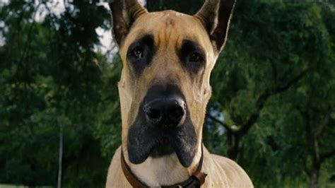 marmaduke pictures movie actually marmaduke review