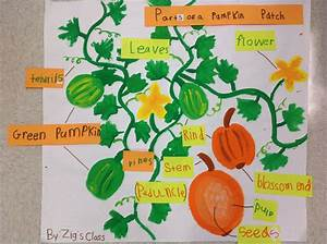 Parts Of A Pumpkin Patch