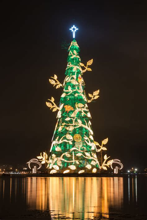 trees of lights in brazil top ten trees in the world photo 6