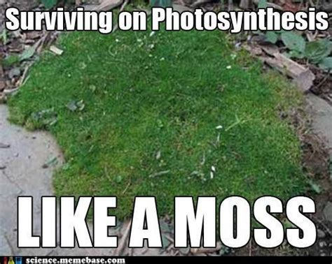 Funny Science Memes - the 42 best science memes on the internet