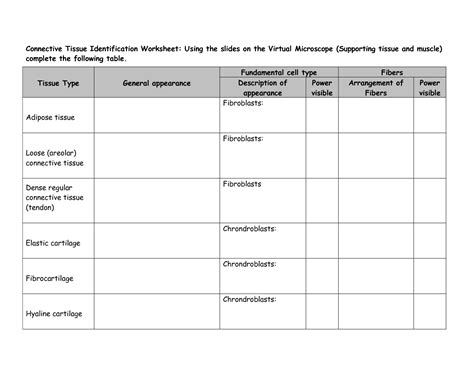13 Best Images Of Cell Identification Worksheets  Diagram Mitosis Worksheet Answers, Mitosis