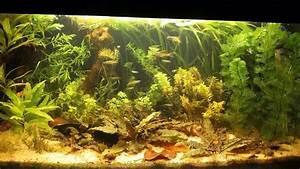 Pin By Trent R  On Aquariums And Aquascaping