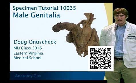 qr tutor  male genitalia anatomy guy