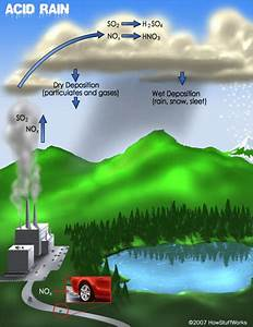 We And Earth  What Effect Does Acid Rain Have On The