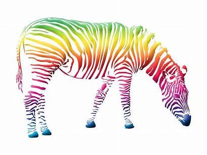Clipart Colorful Zebra Clip Background Herd Heard