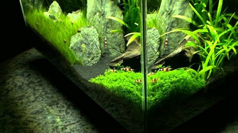 Fluval Edge Aquascape by Fluval Edge 01 02 2011
