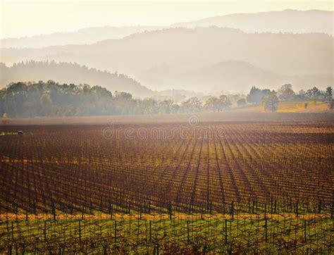 Vineyard, Napa Valley Wine Country, California Stock