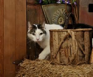 Cat Intestinal Parasites Symptoms