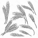 Wheat Line Unique Drawing Vectorified sketch template