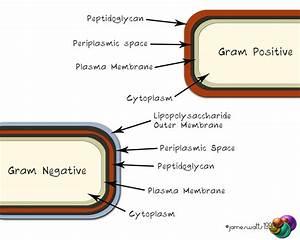 The Basics of Bacteria | VetSci