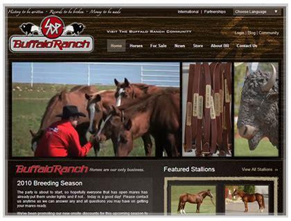 horse breeders web design  development