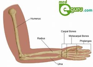 Conditions And Diseases Affecting Hand  Wrist And Forearmmed E Guru