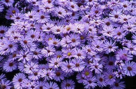 bunga potong produksi indonesia anakagronomydotcom