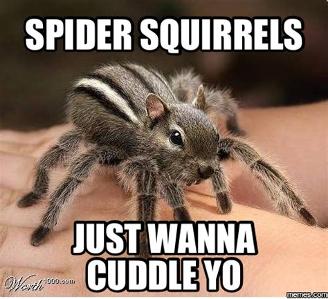 Scary Spider Meme - big scary spiders meme
