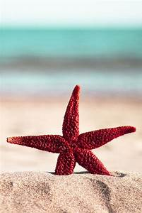 Red Starfish. | Coastal Living... | Pinterest