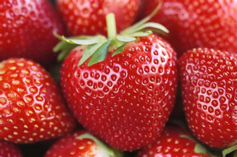 strawberry facts strawberry facts fun facts about strawberries