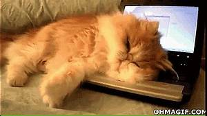 Lazy cat won't leave the laptop - Funny Gifs and Animated Gifs