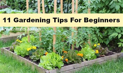 Gardening For Beginners by 11 Gardening Tips For Beginners