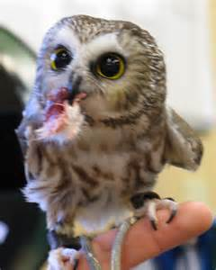 Real Cute Baby Owls