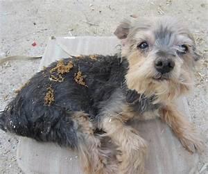 Puce De Chien : l 39 atopie chez le chien ou dermatite atopique canine chien ~ Melissatoandfro.com Idées de Décoration