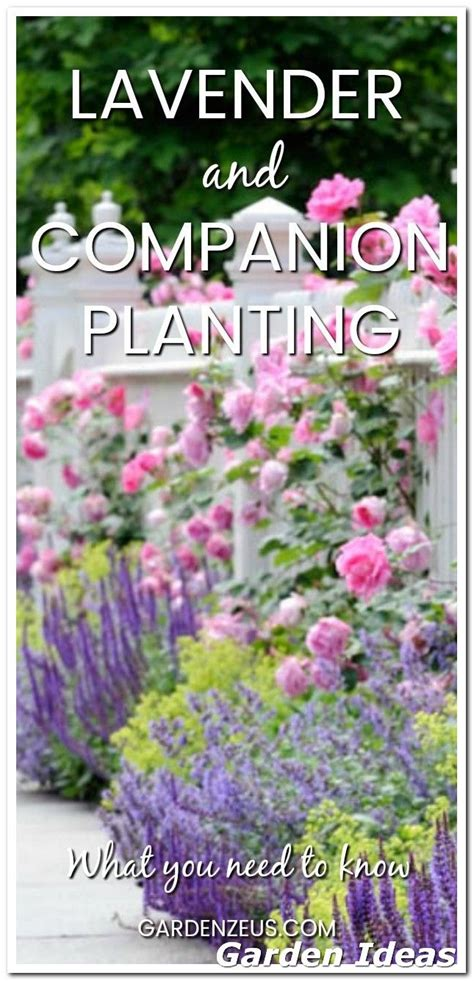 grow   organic garden   plants