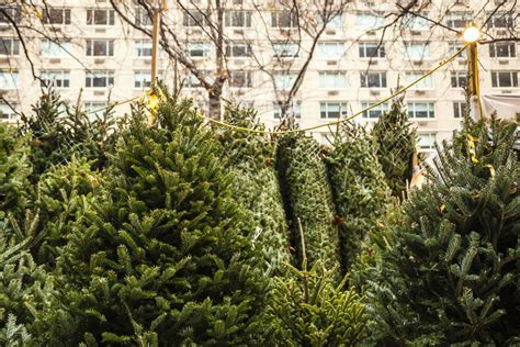 order real christmas tree where to buy a real christmas tree in nyc 9116