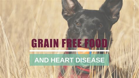 grain  pet food  heart disease boulder holistic vet