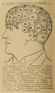 Phrenology Diagrams From Vaught U2019s Practical Character