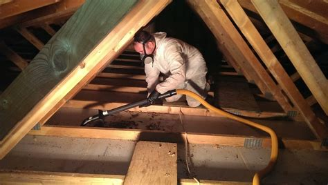 proven ways  deal  mice  attic  work