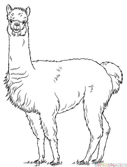 draw  alpaca step  step drawing tutorials