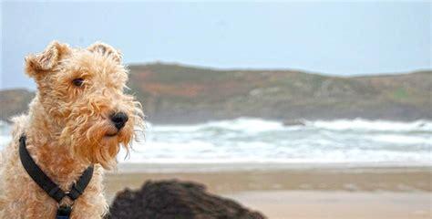 Barfen Jack Russell Terrier