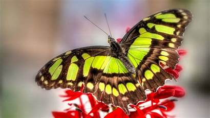 Butterfly Close Colorful Wallpapers Wings Macro Wildlife