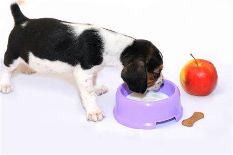 dogs drink milk american kennel club