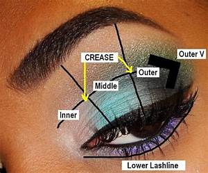 Become Familiar With The Parts Of The Eyelid  You Don U0026 39 T