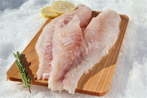 fish grouper fillets frozen fillet eat benefit suppliers order