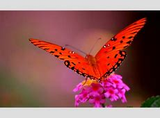 16 Mindblowing Photographs of Butterfly Flight