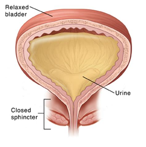 bladder bacteria vary  women  common forms