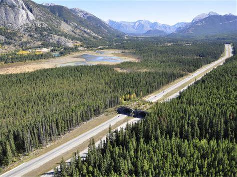 animal bridges  wildlife  highways safely