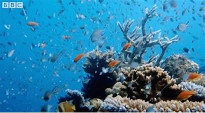 Fish Coral Bbc Sea Reef Marine Ocean