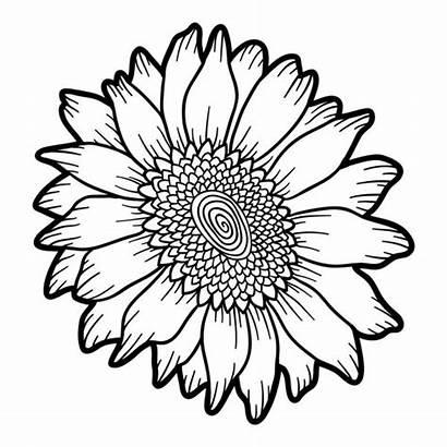 Sunflower Coloring Flower Girassol Colorir Drawing Tournesol