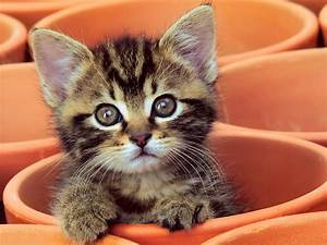 Wedding World: Cute Kitten Gif