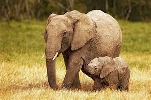 Kenya Africa Elephant Mother with Baby | Fine Art ...