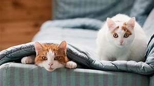 Flöhe Bei Katzen Bekämpfen : fl he bei der katze juckende blutsaugende parasiten ~ Orissabook.com Haus und Dekorationen