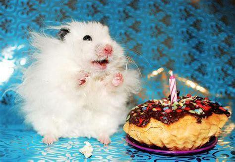 cute animals eating birthday cake   celebrating