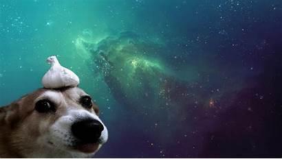 Space Dog Computer Wallpapers Desktop Backgrounds Px